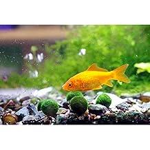 Luffy Marimo sfere di muschio  x 5 + 1 gratis. (12 mm diametro) - Pianta decorativa viva rara per crescere un mare di uova/Kit rana felice (la scimmia li ama). E' la pianta più bella e semplice. Devi solo metterli in acqua!