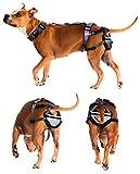 Pet Anti-Breeding System Keuschheitsgürtel für Hunde, (PABS), Humane Geburt Kontrolle schützt gegen Zucht, 2x große