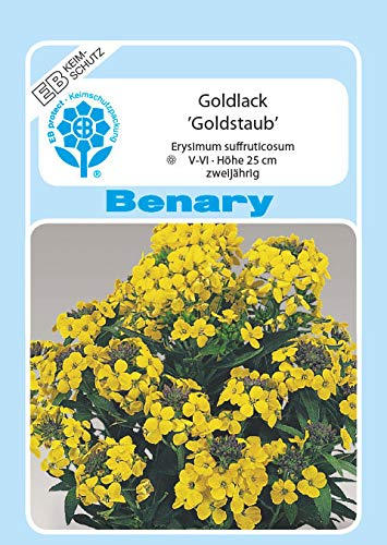 OBI Goldgelbe Blüten