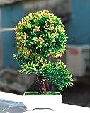 #5: Artificial Bonsai plants with pots | Indoor Plants For Home Decoration | Artificial Bonsai For Office Decoration