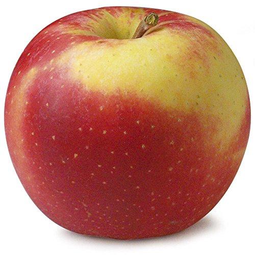 amorebio Bio Apfel Elstar (1 x 1000 gr)