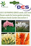 DCS (057) 50 PAMPAS GRASS seeds ,rare re...