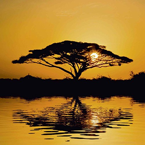 artland-vetro-immagine-murale-ajn-acacia-albero-di-botanica-alba-alberi-fotografie-arancione-orange-