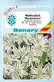 Wolfsmilch, Bergschnee, Euphorbia marginata, ca. 30 Samen