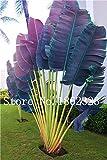 IDEA HIGH Seeds-20pcs Palm Tree Bonsa Garden Ornament Evergreen Trachycarpus Fortunei Bonsai Piante Landschaft Tropicale Garten Haus 22