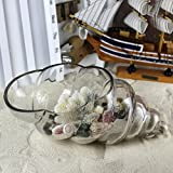 O.RoseLif Home Decor Conch Table Glass Vase Air Plant Terrarium Glass Container Vase Wedding Decoratives Table FlowerPot