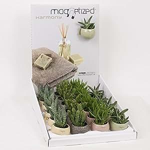 Set da regalo piccole piante grasse in vasi magnetici - Cerco piante da giardino in regalo ...