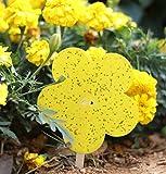 Plai 20 Stück Fliegenfallen, Gelbtafeln Gelb-Sticker, Dekorative Leimfalle Gegen Trauermücken - 12.5cmx12.5cm inkl. 10 Holzstäbe und 10 Bindedraht