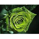 Diamant Malerei, Blume DIY 5D Diamant Stickerei Malerei Kreuzstich für die Familie. Spaßgeschenke für Ihre Eltern, Kinder, Freunde und Mitarbeiter Festliches Dekor Geschenk 20 x 25 cm