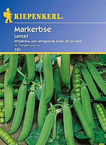 Erbsen Lancet / Markerbsen