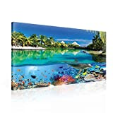 Insel Paradies See Korallen Delphin Leinwand Bilder (PP2355O1FW) - Wallsticker Warehouse - Size O1 - 100cm x 75cm - 230g/m2 Canvas - 1 Piece