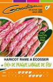 Gondian 61305 CP Y ou CP 3 Semences Haricot Rames à Ecosser Coco de Prague Langue de Feu Jaune 1 x 10,5 x 16,2 cm