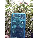 Pcmoviles -- funda Gel silicona tpu liso color turquesa +2 protector pantalla para Alcatel one touch POP C7