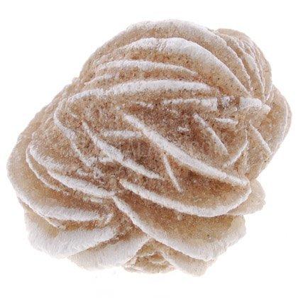 Esemplare di rosa del deserto, dimensioni: mini, confezione da 10.