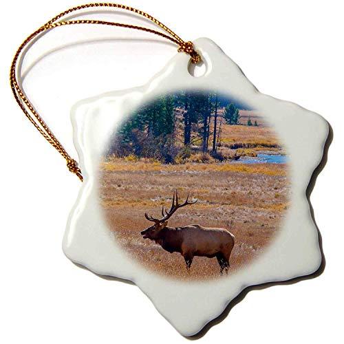 Rocky Mountain Elk (Tamengi Usa, Colorado. Elk In Rocky Mountain National Park Dekofigur Schneeflocke, Porzellan, 7,6 cm)