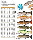 Savage Gear 3D Line Thru Trout Gummifisch Forelle, Kunstköder für Hecht, Zander, Waller, Angelköder zum Spinnfischen und Schleppangeln, Hechtköder, Zanderköder, Wallerköder, Welsköder, Forellenköder, Gummiforelle, Gummiköder, Farbe:Firetiger;Länge / Gewicht /Schwimmverhalten:15cm / 35g/ langsam sinkend