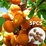 Rosepoem Aprikosenbaum-Samen 5 Stück Mandelsamen-Aprikosen-Samen für Hofgarten