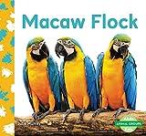 Macaw Flock (Animal Groups)