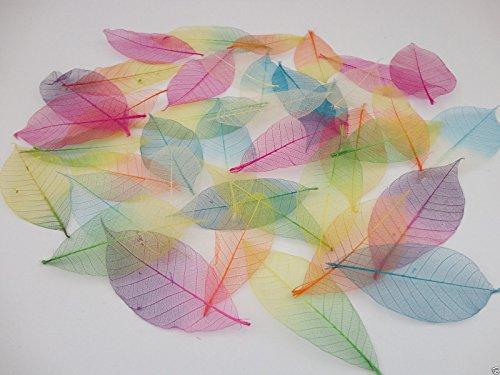 40-x-skeleton-leaves-arts-crafts-cardmaking-scrapbooking-embellishments