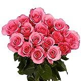 RAMO DE 18 ROSAS NATURALES FRESCAS EN COLOR ROSA SUAVE. FLORES A DOMICILIO