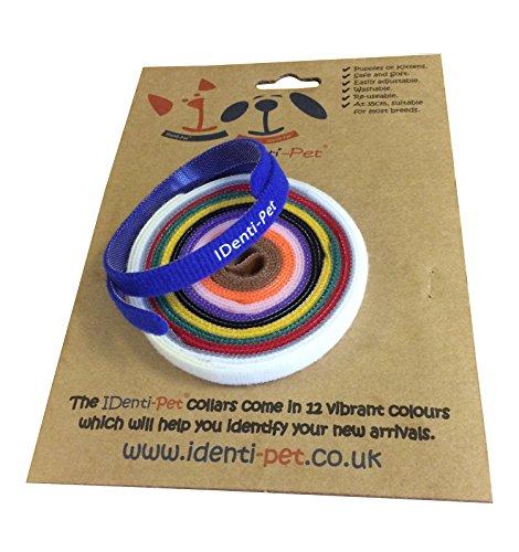 Vet Fleece identi-pet 12Wurfbox Halsbänder Welpen, Kätzchen-weicher, Verstellbarer und wiederverwendbar