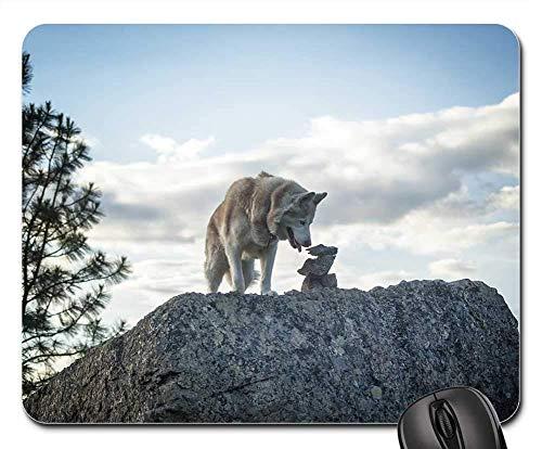 Gaming-Mauspads, Mauspad, Siberian Husky Hund Tier Pet Cute White Young -