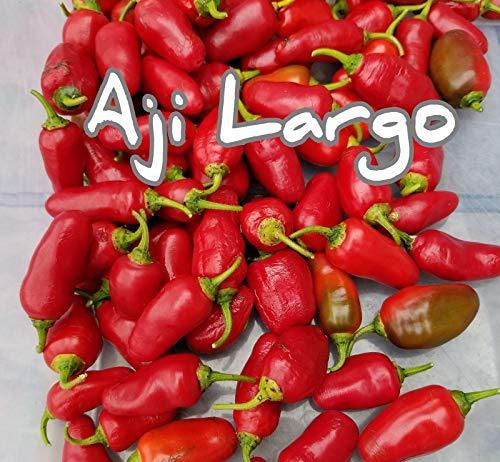 Portal Cool (25+) Aji Largo Rocotos Pepper Samen