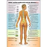 Dorn Methode: Wirbel- und Nervenübersicht nach der Methode Dorn A2 -