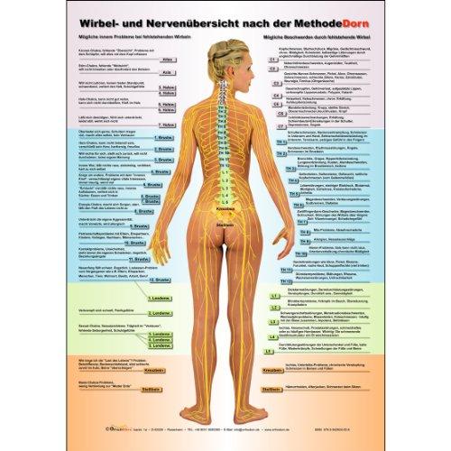 Dorn Methode: Wirbel- und Nervenübersicht nach der Methode Dorn A3