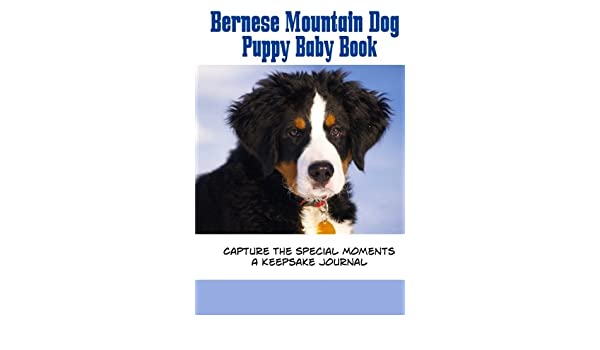 Buy Bernese Mountain Dog Puppy Baby Book Capture The Special