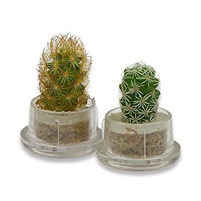 Extragifts Schlüsselanhänger el cactus - Kaktus life von Extragoods auf Du und dein Garten
