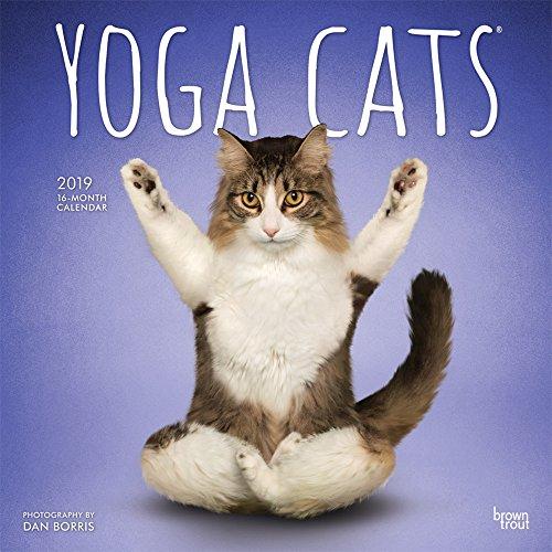 Yoga Cats - Joga-Katzen 2019 - 18-Monatskalender (Wall-Kalender)