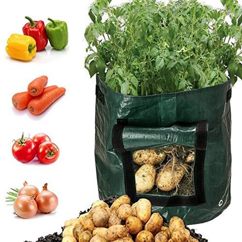 Kartoffeln zum Anbauen