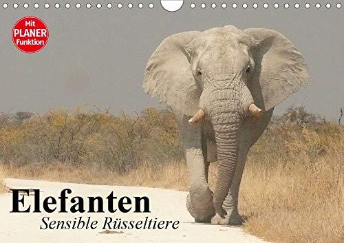 Elefanten. Sensible Rüsseltiere (Wandkalender 2020 DIN A4 quer): Die starken und sensiblen...