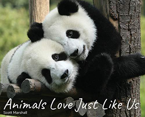 Animals Love Just Like Us
