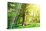PMP 4life. Baum in Blumenwiese Natur | Acrylglas 120 x 85 cm mit edlem Design | Qualitäts Druck auf 3mm dicken Plexiglas | Made in Germany