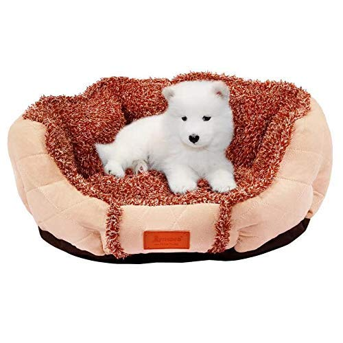 BIGLUFU Lit pour Chien avec Matelas Confortable, 100% Peluche Ultra Doux, idéal pour Petits, Moyens et