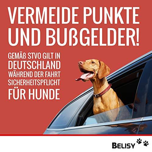 BELISY Hunde-Sicherheits-Gurt fürs Auto – höchste Sicherheit für Dich und Deinen Hund – mit besonders elastischer Ruckdämpfung für maximalen Komfort – passend für alle Hunderassen – höchste Markenqualität - 6