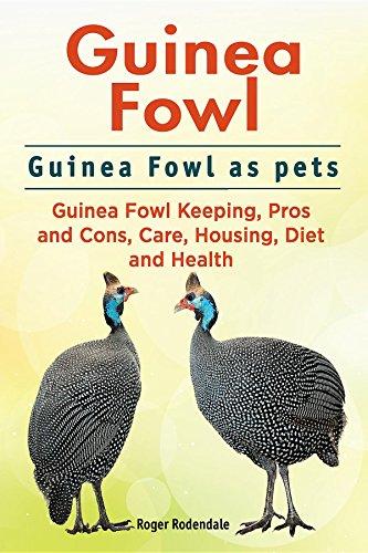 Guinea Fowl Guinea Fowl As Pets Guinea Fowl Keeping Pros