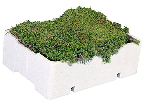 1 Kiste Plattenmoos, ca. 2 bis 2,5kg, frisch, naturgrün, Lappenmoos, Polstermoos