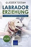 Labrador Erziehung: Hundeerziehung für Labrador Welpen -