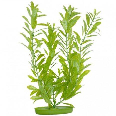 planta-hygrophila-37cm