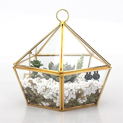 Artistico Moderno in ottone rame vetro trasparente jewel-boxed Pentagono Forma Vaso piante Fioriera in vetro, motivo terrari muschio Felce con coperchio basculante, Oro