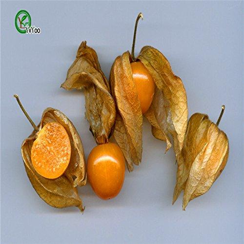 20-rare-semi-di-albero-di-limone-deliziosi-semi-di-alberi-da-frutto-per-la-casa-giardino-semina-tass