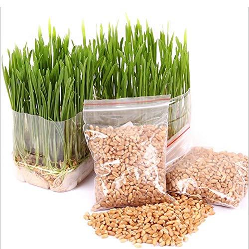 Cat Grass Seeds für Hairball Entfernen 600Pcs Mini Bio-Haustier Gras Kit - Grow Wheatgrass für Haustiere