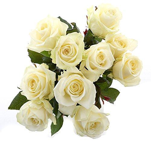 Choice of Green - 1 bouquet de rose blanche Avalanche Small - 10 tiges - Hauteur ↕ 60 cm - Qualité de Hollande - Frais du cultivateur