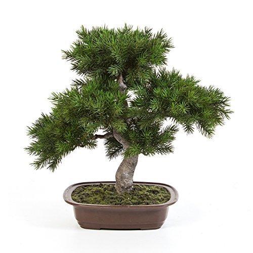artplants Kunst Bonsai Pinie Selena in Dekoschale, dunkelgrün, 48 cm - Künstlicher Bonsai/Deko Bonsai Busch