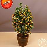 Pérdida de la promoción! Los árboles 100Seed / Lote Balcón Patio de tiesto de frutas kumquat semillas plantadas semillas de naranja mandarina Citrus Semillas, # 95K1S0