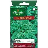 Vilmorin - Winter gigante de espinacas