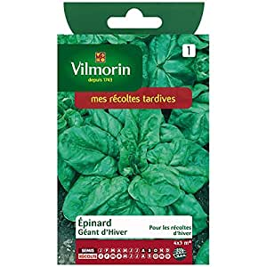 Vilmorin - Spinaci gigante inverno